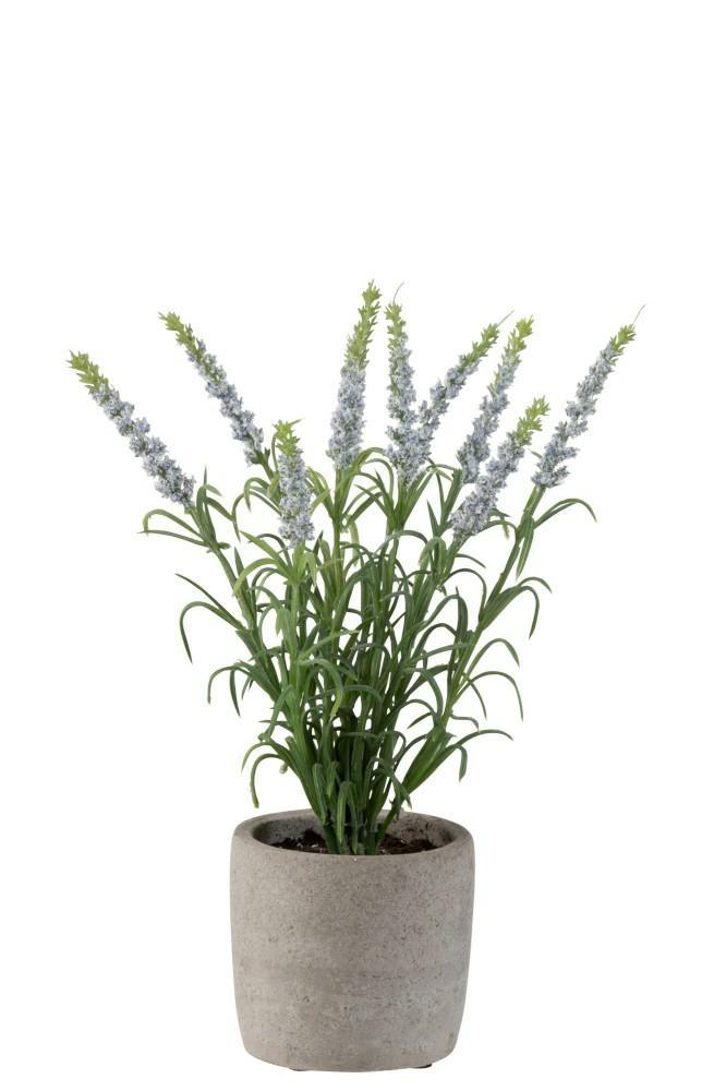 Levandule v šedém květináči světle fialová
