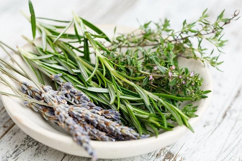 Vlastní bylinky: Kde sbírat, jak sušit a v čem skladovat?