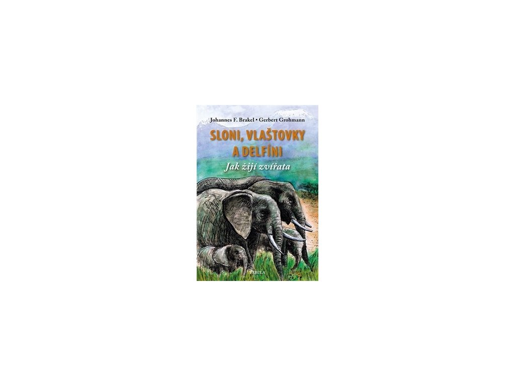 Sloni, vlaštovky a delfíni. Jak žijí zvířata