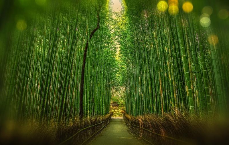 Bambus/bambusová viskóza