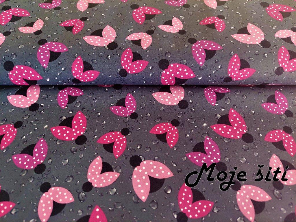 Růžové berušky
