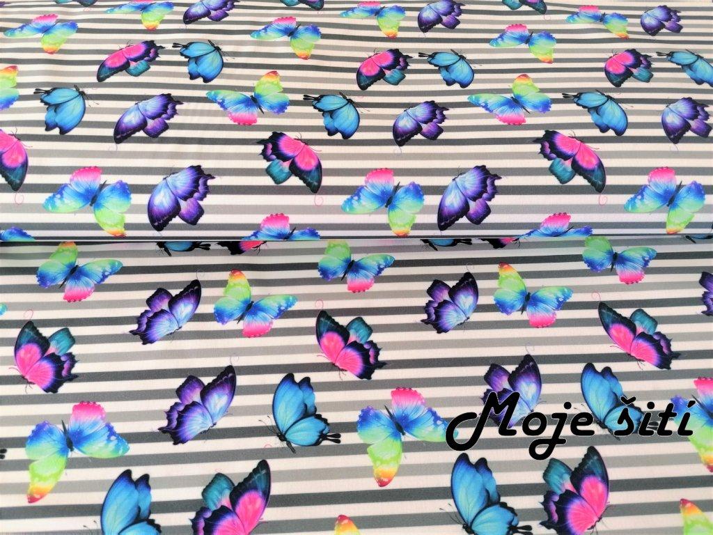 motylci a prouzky