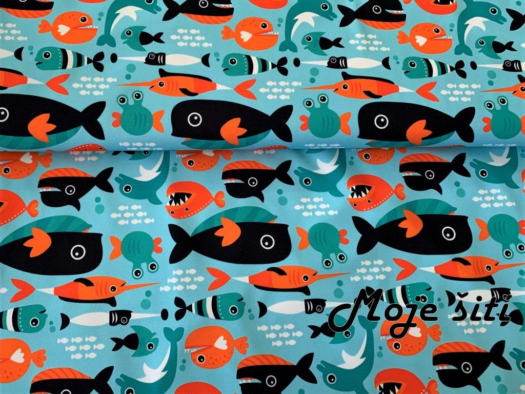 dravé rybičky