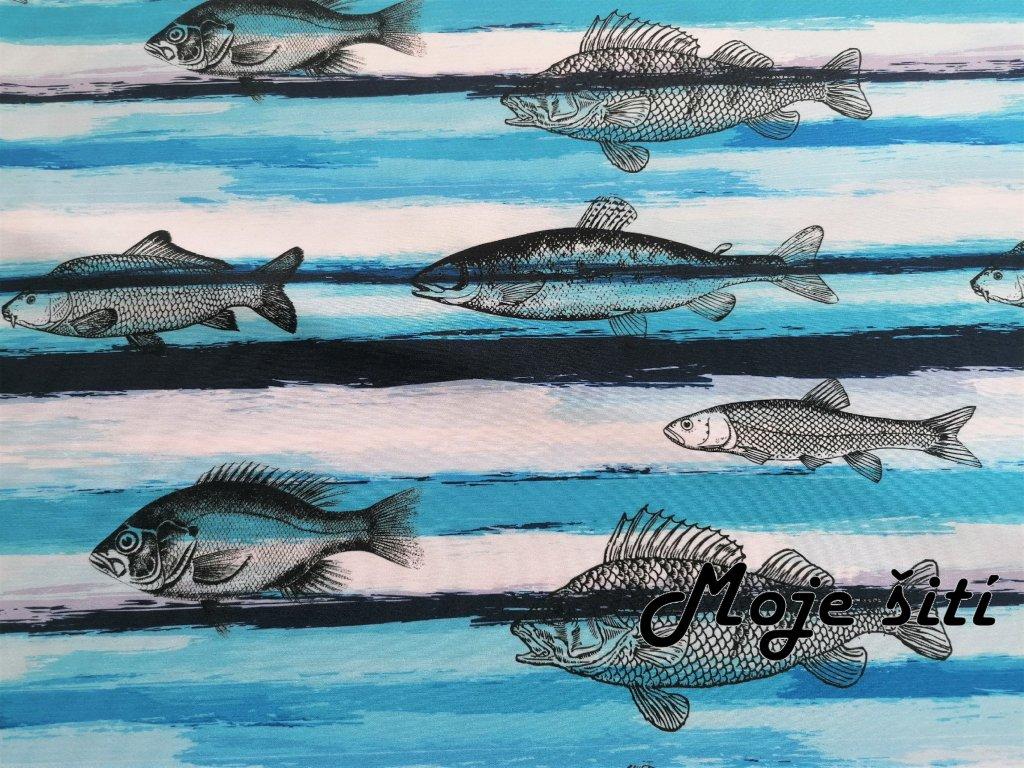 Ryby velké