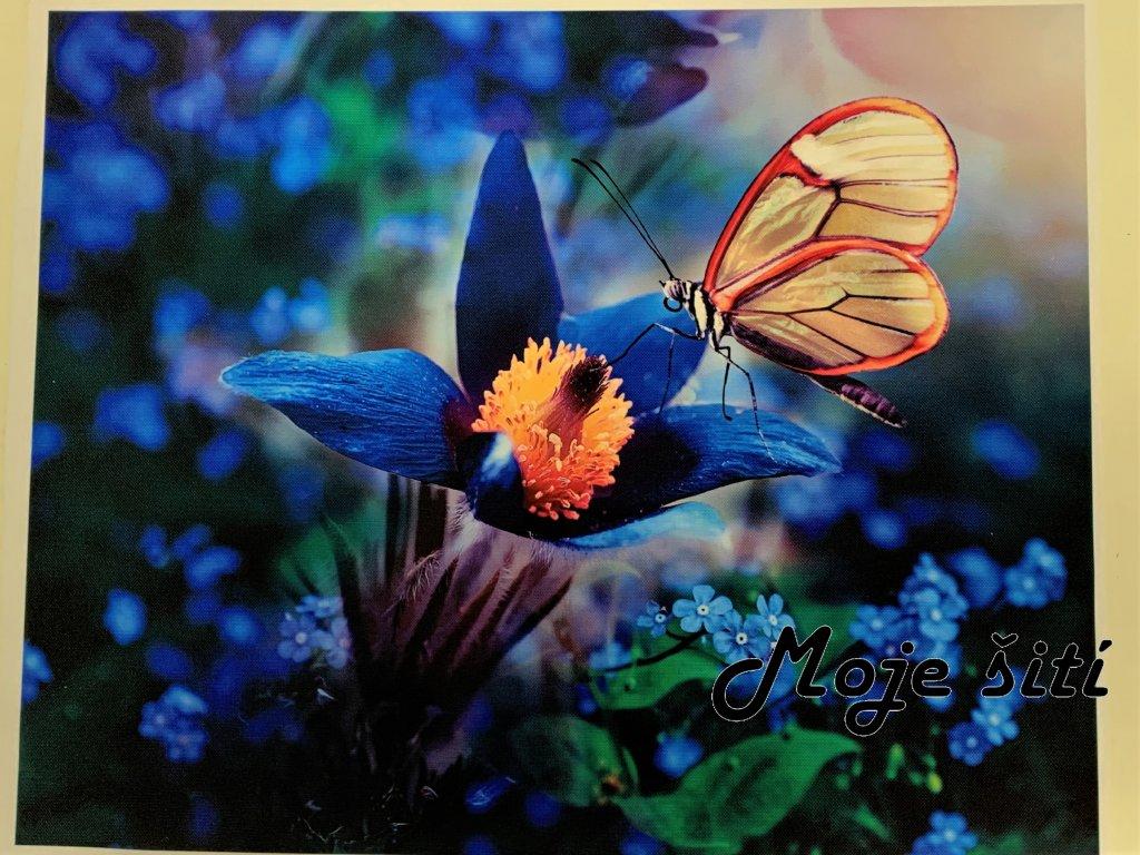 motyl na kvetu