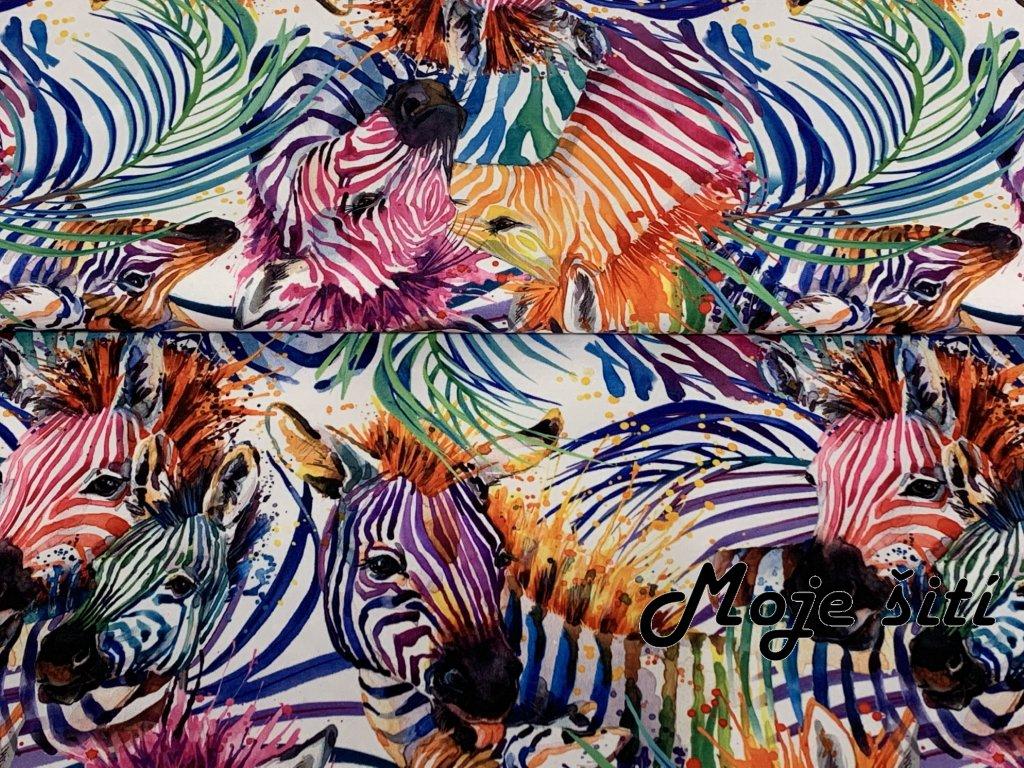 barevne zebry letni