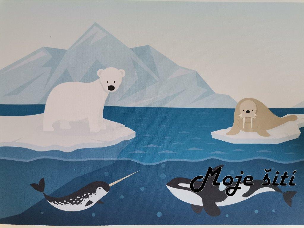 Lední medvěd a Narval