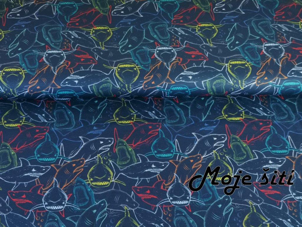 Barevní žraloci (1)