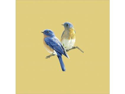 ptáčci 20x20