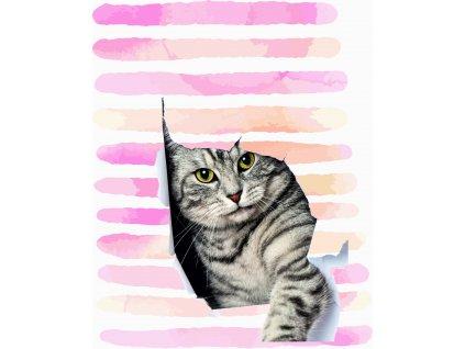 kočka a proužky 40x50