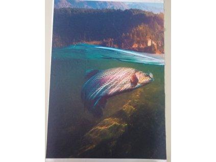 panel pstruh ryba