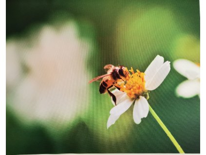 Vosa na květu
