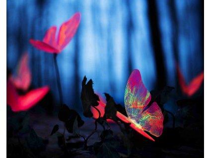 neonoví motýlci