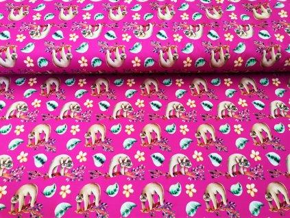 Lenochodi na růžové