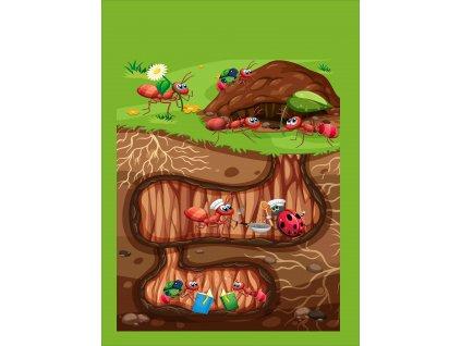 mravenci doma 50x70