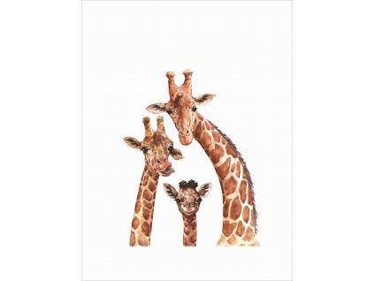 žirafí rodinka