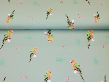 Papoušci (8)