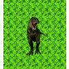 T rex na zeleném