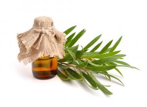 Čajovník australský. Tea tree olej