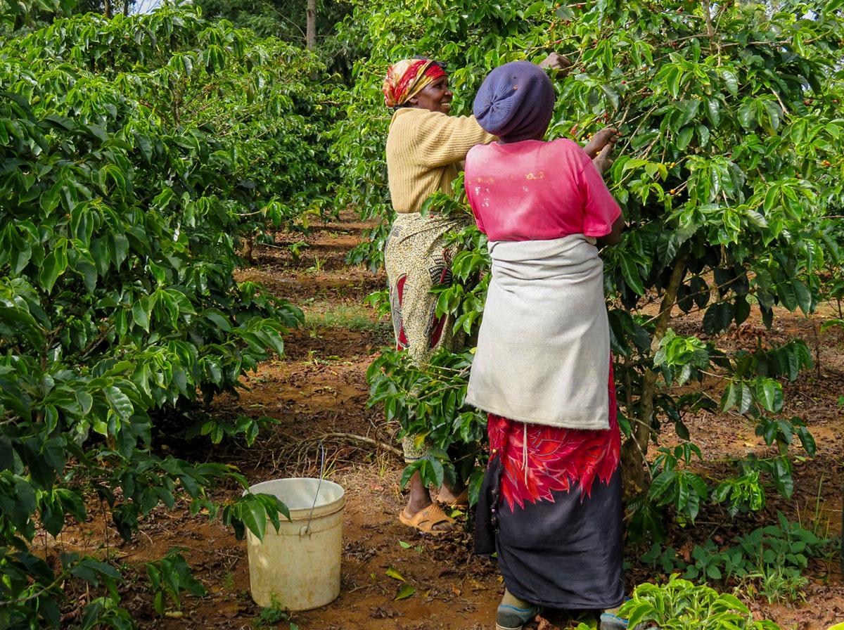 COFFEE-NOW-Burundi-1