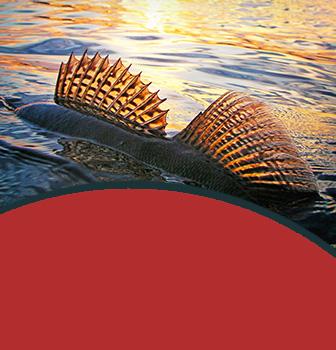 Výběr ryby
