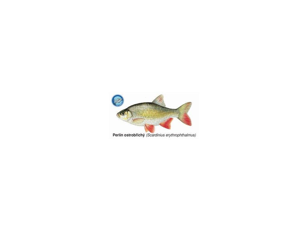 Sada magnetek s rybami (20 ks)
