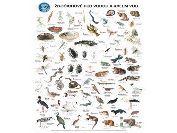 Plakát Živočichové pod vodou a kolem vod s lištami na pověšení