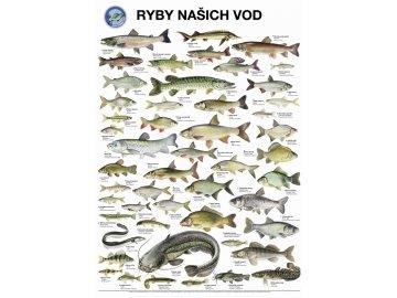 Plakát Ryby našich vod s lištami na pověšení