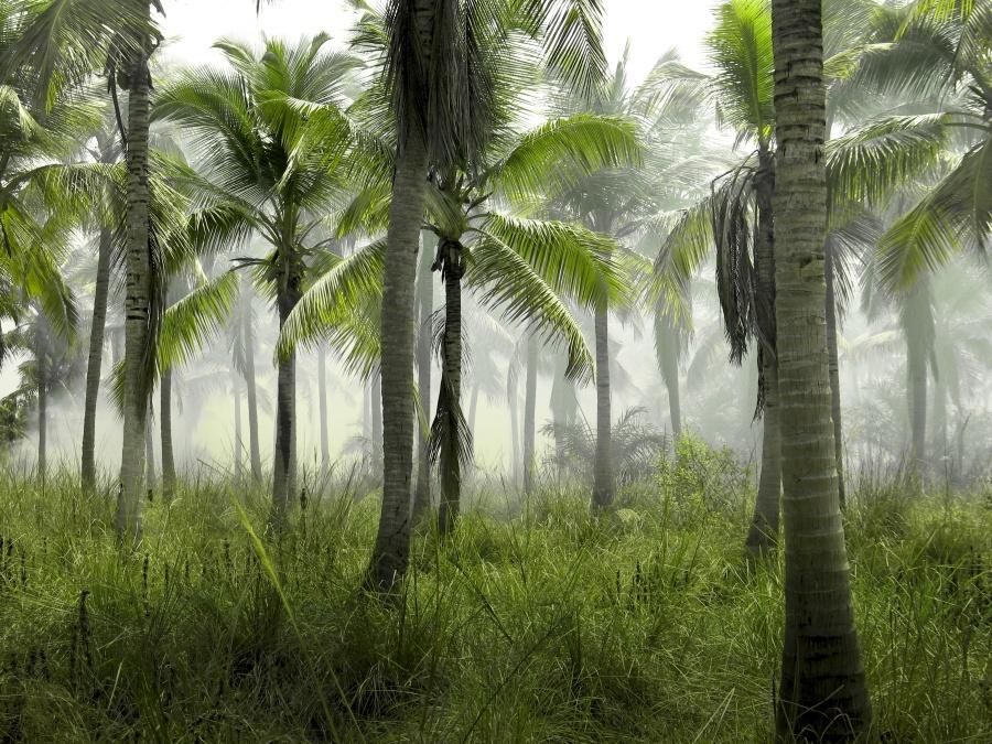 myty-palmovy-olej