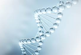 Molekulárna biológia