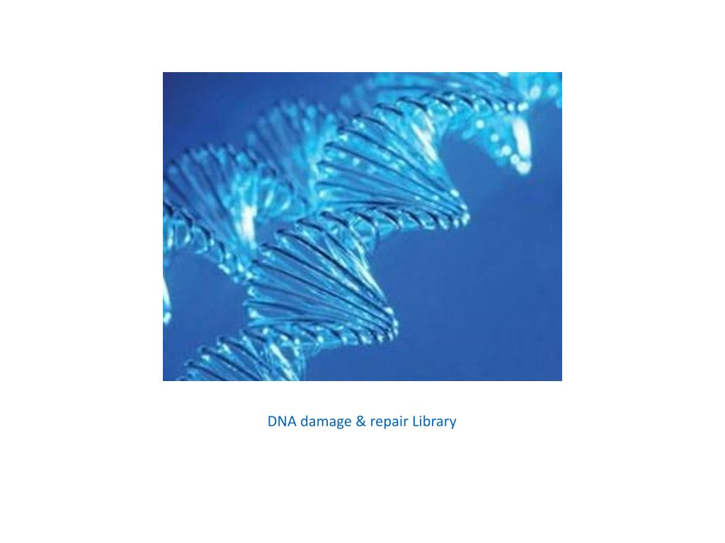 dna damage & repair library