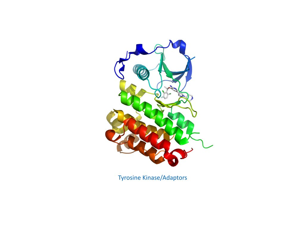 Tyrosine Kinase Adaptors