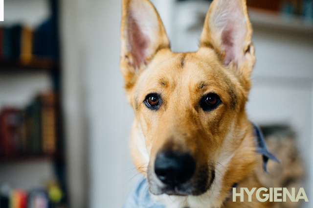 Hygiena pre psov