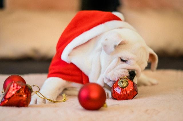 Vianoce s Mopslickom