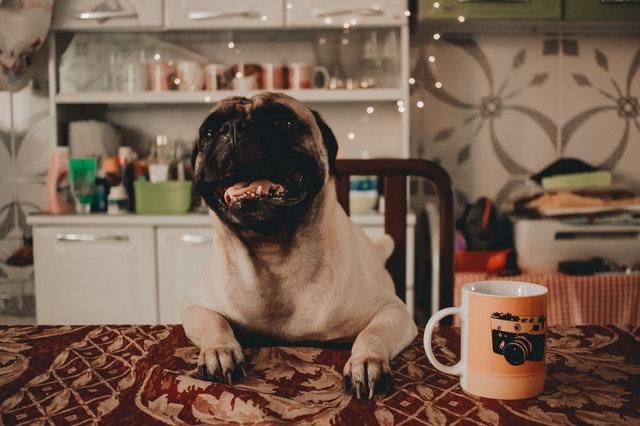 Drobnosti pre majiteľov psov