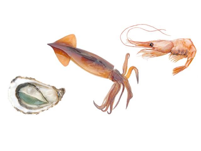 Mořský plody