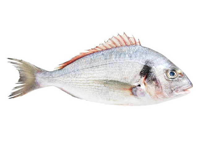 Ostatní ryby