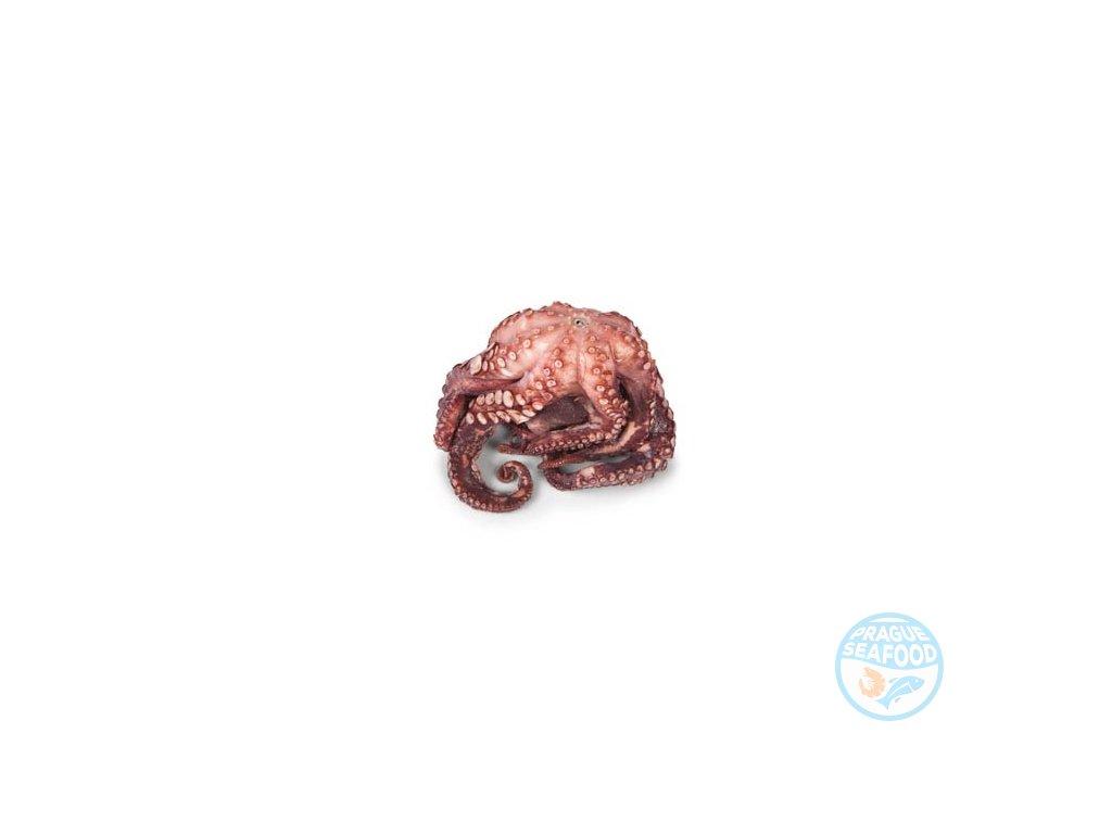 chobotnice 800:1200