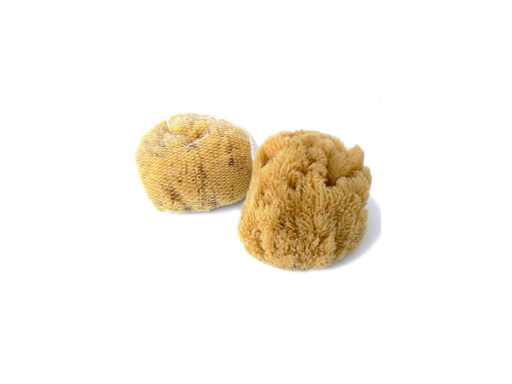 Karibská 14-15 cm