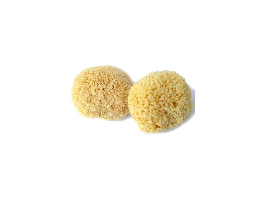Žlutá pacifická 14-15 cm
