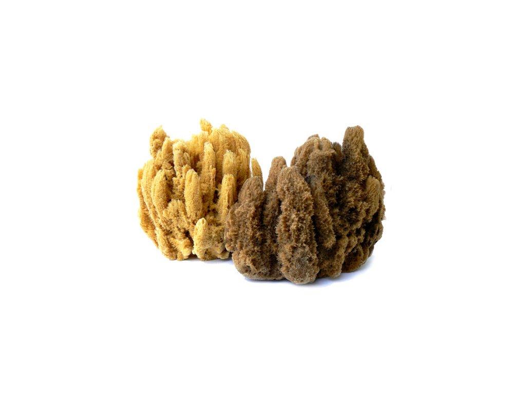 morska houba CRA 487
