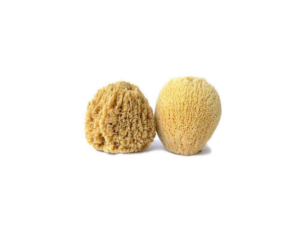 morska houba GL 482