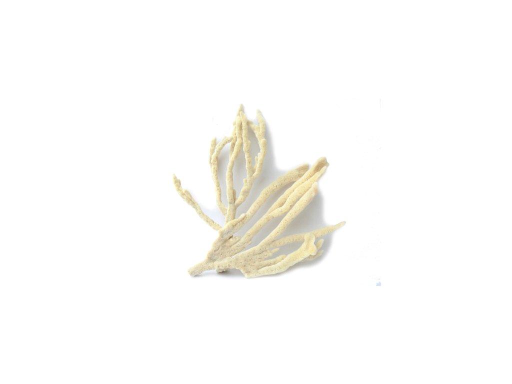 Houbové korály 11-15 cm