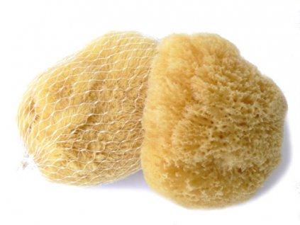 Karibská 7-9 cm