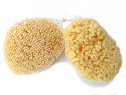 Žlutá pacifická 8-10 cm