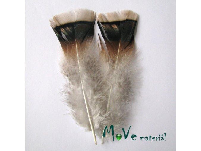 Krocaní peří ocasní cca 14-16cm,2ks přírodní