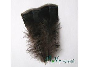 Krocaní peří ocasní délka 13-16cm,2ks přírodní