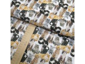 Bavlněné plátno - Kočky - digi tisk - šíře 150cm/1bm