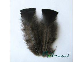 Krocaní peří ocasní délka cca 16cm,2ks přírodní