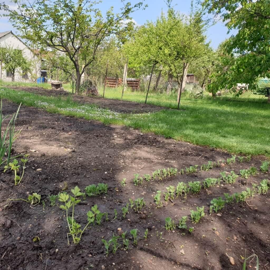 EKO SERIÁL RODINY MR.SALATOFFA 5: Sekat nebo nesekat trávník?